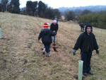 Tree Planting Activity in Wetherby